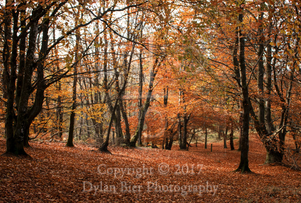 Woodland Walk in Autum